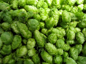 Fresh Hops - Vancouver Brewery Tours