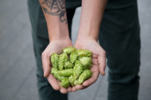 Fresh Hops at Postmark Brewing
