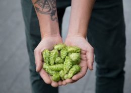 Vancouver Brewery Tours Inc -Fresh Hops at Postmark Brewing