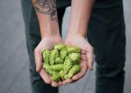 Fresh Hops at Postmark Brewing
