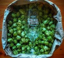 Vancouver Brewery Tours Inc. - Fresh Hops at Strange Fellows Brewing