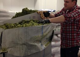 Vancouver Brewery Tours Inc. - Hops Cutting at Big Rock Urban