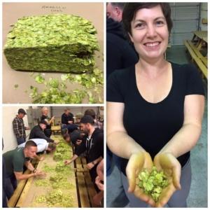 Hops Rubbing at Callister Brewing