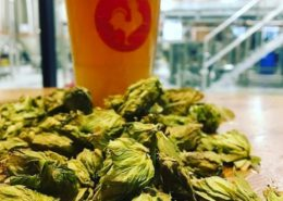 Vancouver Brewery Tours Inc. - Big Rock Brewery and Eatery - Hops